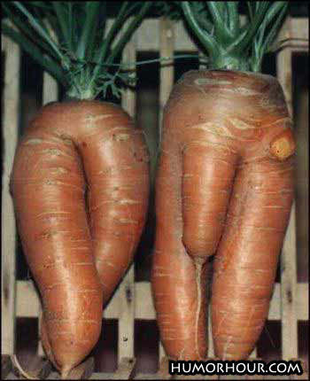 Nice looking carrots