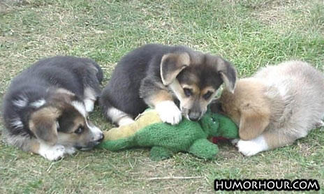 Dogs Attack Gator