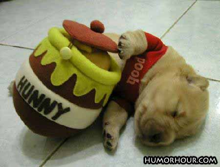 Pooh Pup