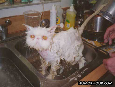 Washing the cat!