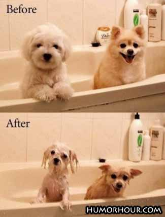 Dogs, before and after