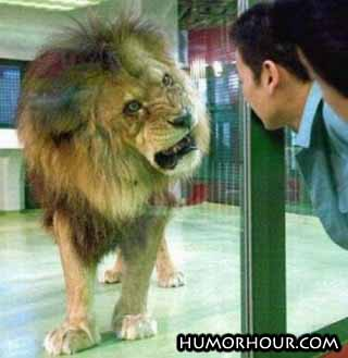 This lion looks nice