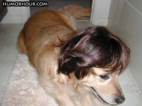 Dog fashion wig