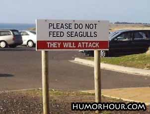 Please do not feed seagulls