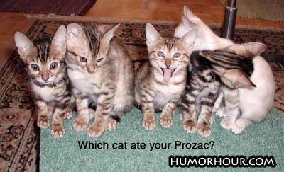 Which cat ate your Prozac?