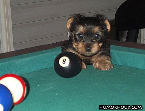Hit the eight ball now